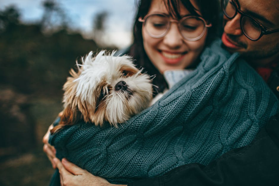 Pets On the Go: The Complete Checklist for Traveling with Pets