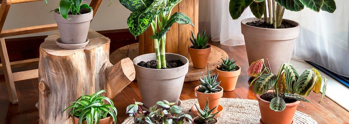 Can House Plants Help Reduce Indoor Heat?