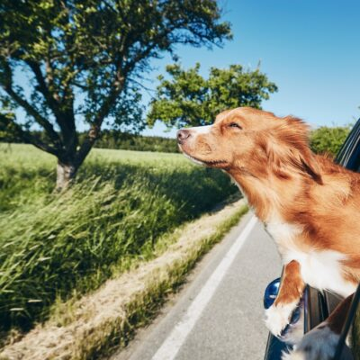7 Ways to Enjoy Long Road Trips With Your Pup