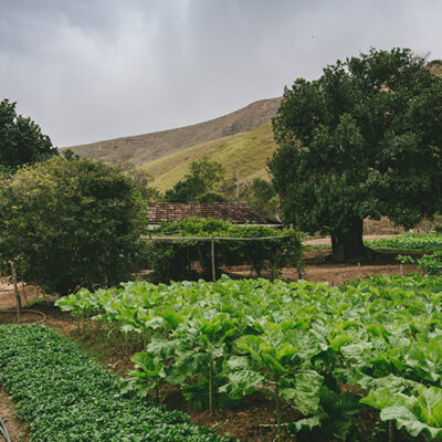 How Small-scale Farms Can Maximize Profits