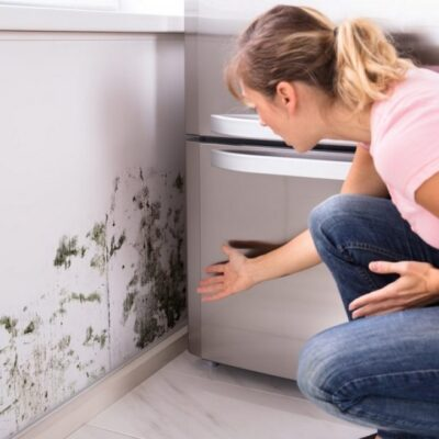Mold: Its Effects on Your Health and Home
