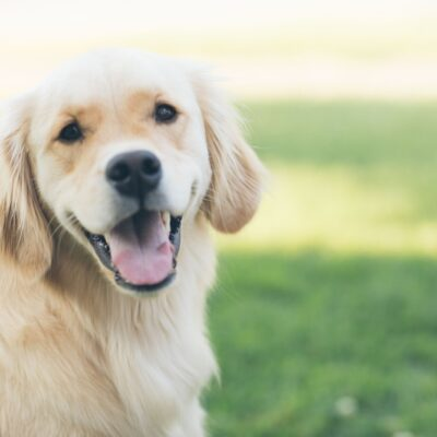 The Best Top-Rated Dog Products for Your Pooch in 2020