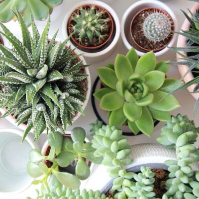 Going Green During Quarantine: Nurture Your Love for Houseplants