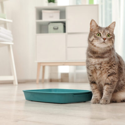 4 Ways to Stop Cat Litter From Smelling in Your House