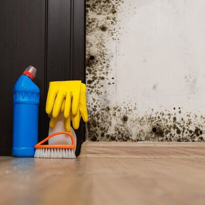 How Do You Know if Your Home Has Toxic Mold or Fungi?