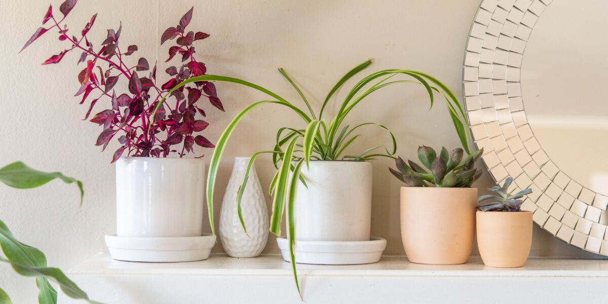 Renovating Your Home to Make It More Plant-focused