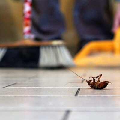 5 Ways To Maintain A Pest-Free Home