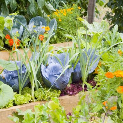 Building a Home Garden: Essential Factors You Must Consider